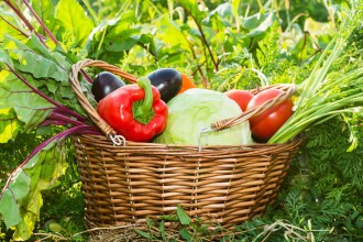Vegetables in basket on garden