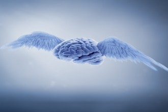 A human brains with wings - free mind concept